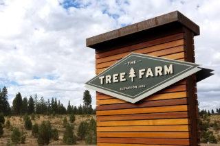The Tree Farm
